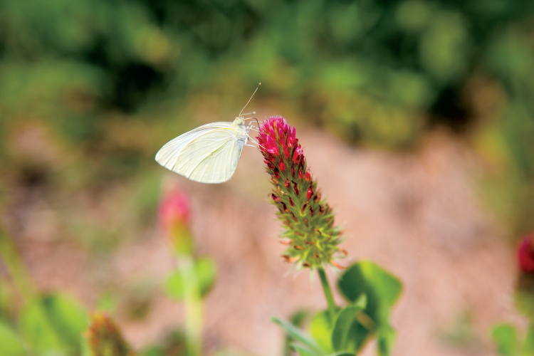 Pollinator Habitats